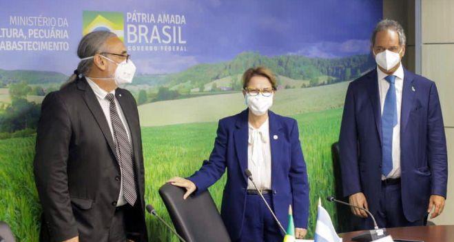 brasil-vuelve-a-permitir-el-ingreso-de-uva-en-fresco-sanjuanina-sin-bromurar