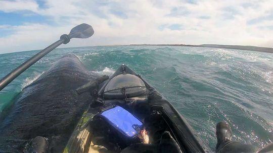 salio-a-pescar-en-kayak-y-termino-montado-sobre-el-lomo-de-una-ballena